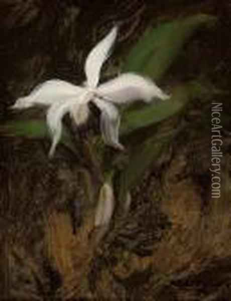 White Lily Oil Painting - James Stuart Park