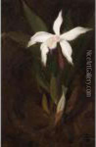 Still Life With An Orchid Oil Painting - James Stuart Park