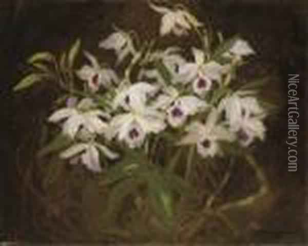 Dendrobium Orchids Oil Painting - James Stuart Park