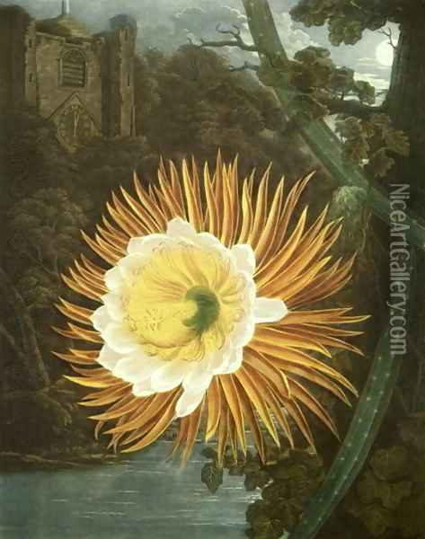 The Night Blowing Cereus or Night-flowering Cactus, engraved by Dunkarton, from The Temple of Flora by Robert Thornton, pub. 1800 Oil Painting - Reinagle, P. & Pether, A.