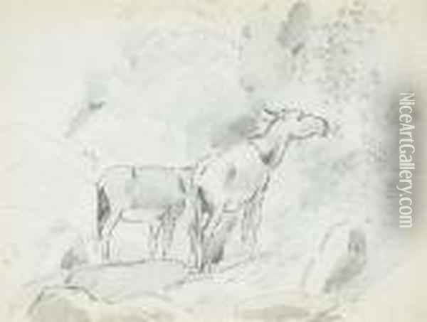 Two Donkeys Grazing In The 