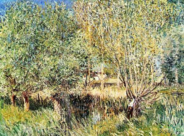 Willows on the Banks of the Orvanne Oil Painting - Alfred Sisley