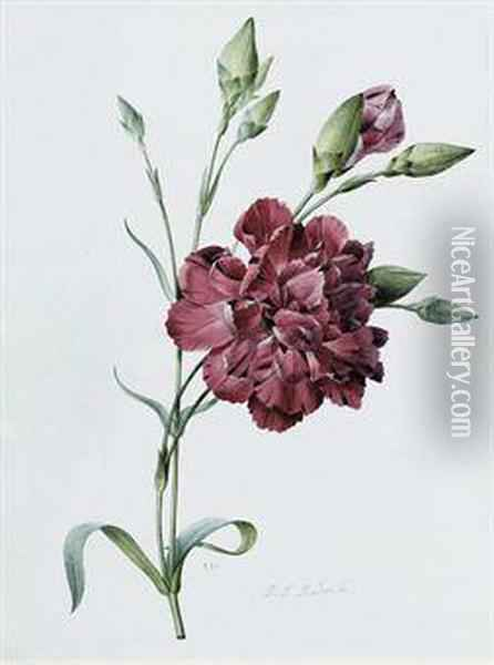 A Carnation Oil Painting - Pierre-Joseph Redoute