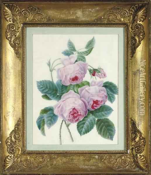Study Of A Bunch Of Roses Oil Painting - Pierre-Joseph Redoute