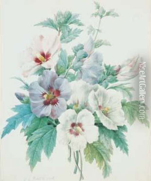Redoute - < Althaea > Oil Painting - Pierre-Joseph Redoute