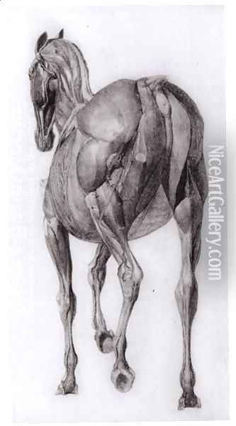 Dorsal view of the muscle structure of a progressively dissected horse, study No.7 from The Anatomy of the Horse, 1766 Oil Painting - George Stubbs