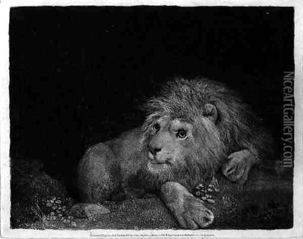 A Lion A Recumbent Lion engraved by the artist, pub. 1788 Oil Painting - George Stubbs
