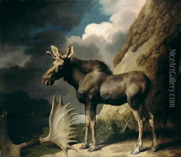 Moose, 1770 Oil Painting - George Stubbs