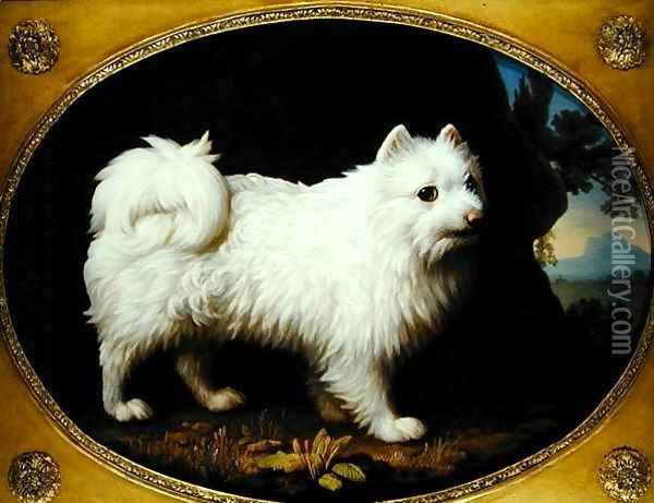 A White Spitz, c.1770 Oil Painting - George Stubbs