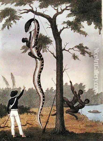 The skinning of the Aboma snake, shot by Captain Stedman, from Narrative of a Five Years Expedition Against the Revolted Negroes of Surinam 1772-77, published 1813 Oil Painting - John Gabriel Stedman
