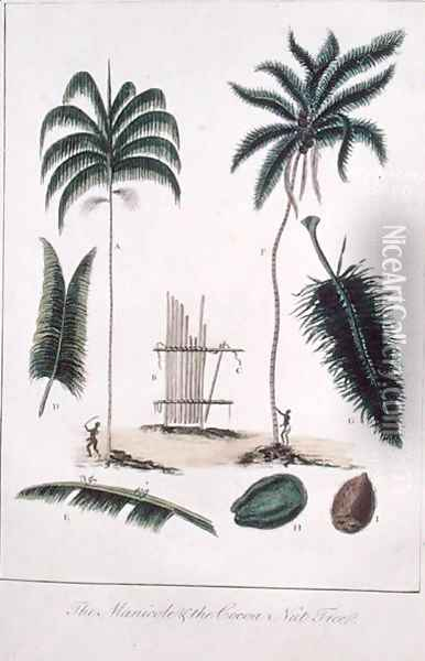 The Manicole and the Cocoa Nut Tree, from Narrative of a Five Years Expedition against the Revolted Negroes of Surinam 1772-77, published 1791 Oil Painting - John Gabriel Stedman