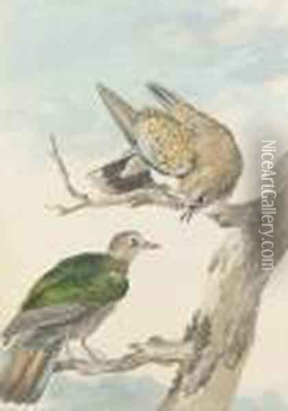 Two Turtle Doves On A Tree Oil Painting - Aert Schouman