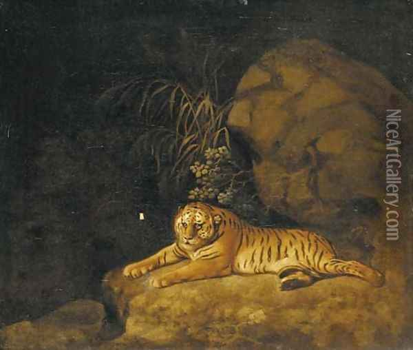 Portrait of the Royal Tiger Oil Painting - George Stubbs