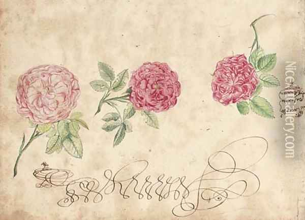 Three studies of a rose Oil Painting - French School