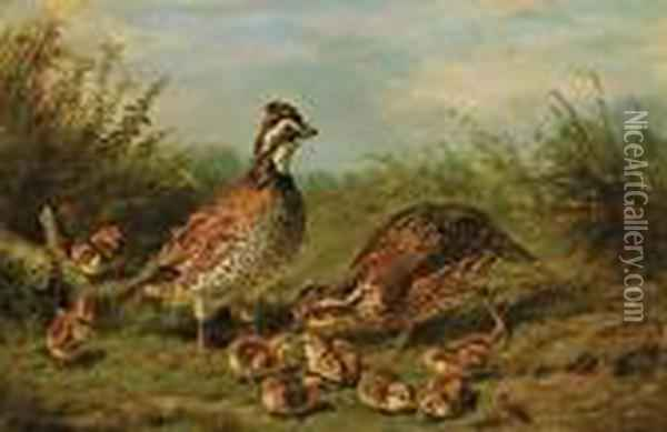 Grouse And Chicks Oil Painting - Arthur Fitzwilliam Tait