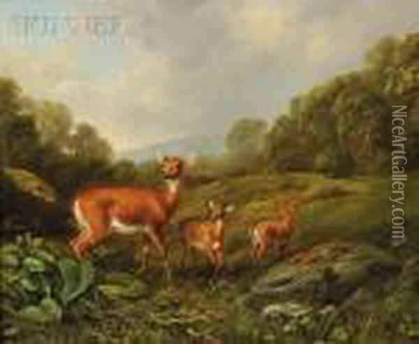 Doe And Fawns In A Landscape Oil Painting - Arthur Fitzwilliam Tait
