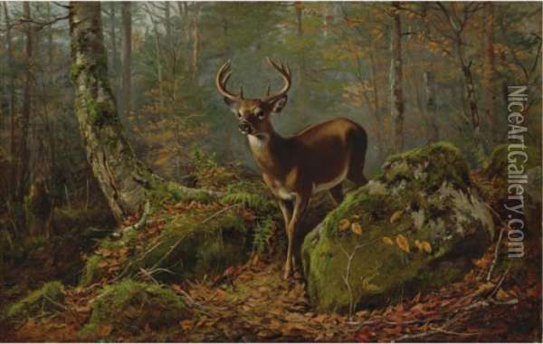 Buck In The Forest Oil Painting - Arthur Fitzwilliam Tait
