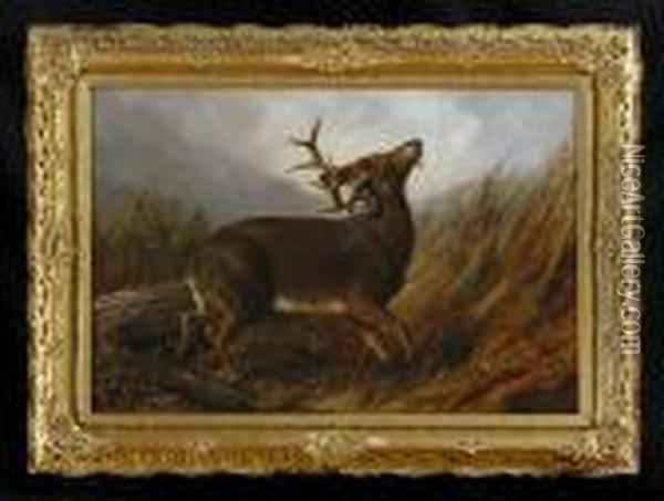 Wounded Stag Oil Painting - Arthur Fitzwilliam Tait