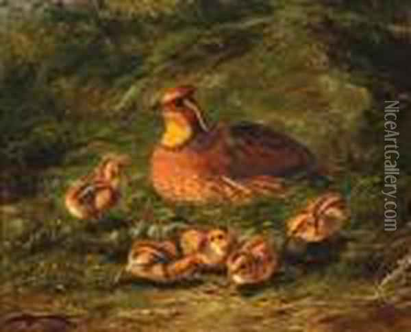 ''quail And Young' Oil Painting - Arthur Fitzwilliam Tait