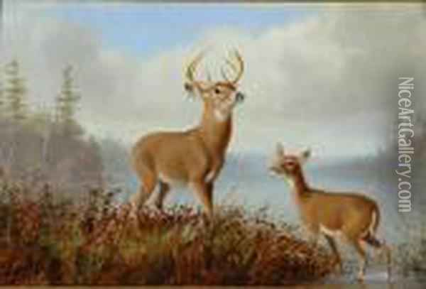 Stag And Doe Oil Painting - Arthur Fitzwilliam Tait