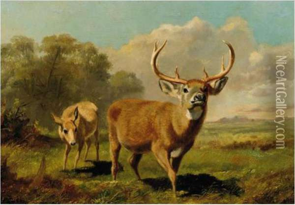 Buck And Doe Oil Painting - Arthur Fitzwilliam Tait