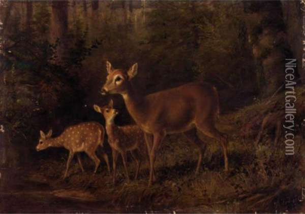 Doe And Two Fawns By A Stream Oil Painting - Arthur Fitzwilliam Tait