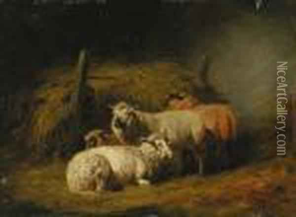 Sheep In Shed Oil Painting - Arthur Fitzwilliam Tait