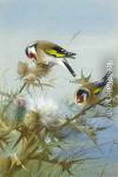 Goldfinches Oil Painting - Archibald Thorburn