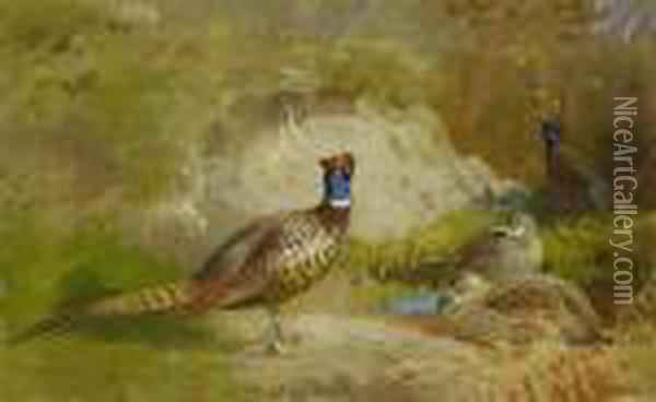 Pheasants In A Landscape Oil Painting - Archibald Thorburn