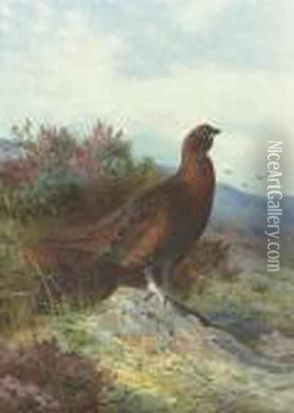 Red Grouse On A Moor Oil Painting - Archibald Thorburn
