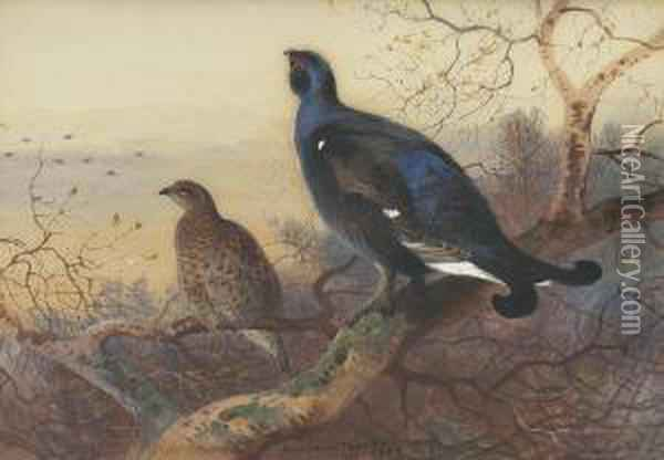 A Blackcock And Grey Hen Perched In The Treetops At Sunset Oil Painting - Archibald Thorburn
