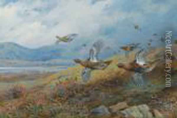 Driven Grouse Oil Painting - Archibald Thorburn