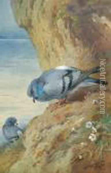 Rock Doves Oil Painting - Archibald Thorburn