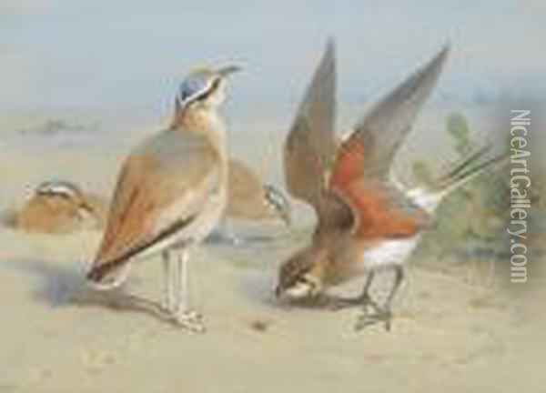 Cream Coloured Courser And Pratincole Oil Painting - Archibald Thorburn