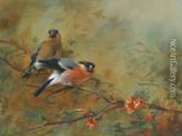 Bullfinches And Pyrus Japonica Oil Painting - Archibald Thorburn