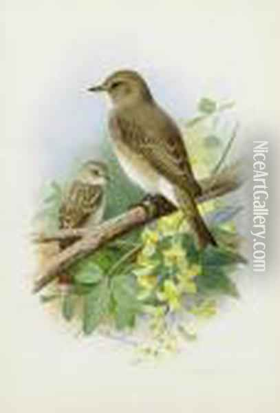 Spotted Flycatchers Oil Painting - Archibald Thorburn