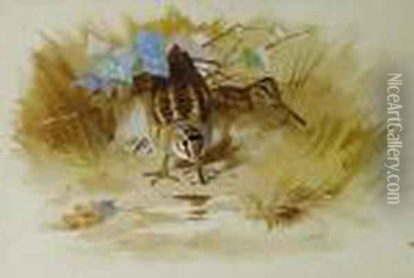 Woodcock In A Sandy Hollow Oil Painting - Archibald Thorburn