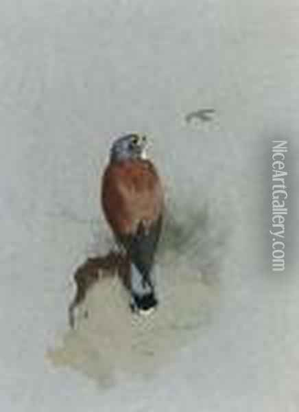 A Lesser Kestrel Oil Painting - Archibald Thorburn
