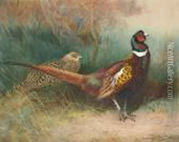 A Cock And Hen Pheasant At The Edge Of A Copse Oil Painting - Archibald Thorburn