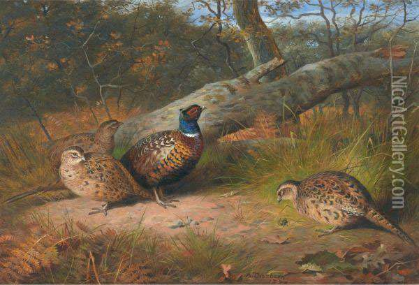 The Fallen Beech- A Cock And Three Hen Pheasants With A Wasp Oil Painting - Archibald Thorburn