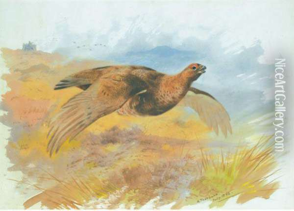 Red Grouse Over The Butts Oil Painting - Archibald Thorburn