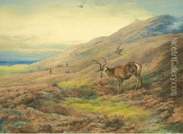 In The Highlands, Red Stag Mobbed By A Pair Of Peregrines Oil Painting - Archibald Thorburn