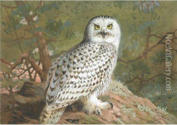 A Female Snowy Owl Oil Painting - Archibald Thorburn