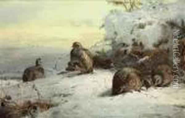 A Covey Of Grey-leg Partridge In A Snow-bound Landscape, Restingbeneath Gorse Oil Painting - Archibald Thorburn