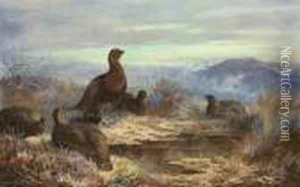 A Covey Of Five Red Grouse Amongst Heather Oil Painting - Archibald Thorburn