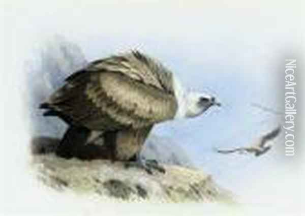 Griffon Vulture Oil Painting - Archibald Thorburn
