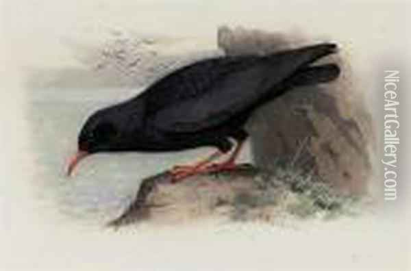 Red-billed Chough Oil Painting - Archibald Thorburn