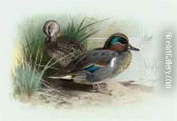 American Green-winged Teal Oil Painting - Archibald Thorburn