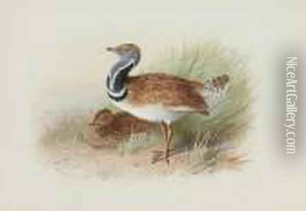 A Pair Of Little Bustards Oil Painting - Archibald Thorburn