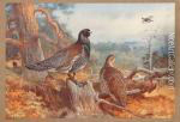 Game Birds And Wild-fowl Of Great Britain And Ireland Oil Painting - Archibald Thorburn